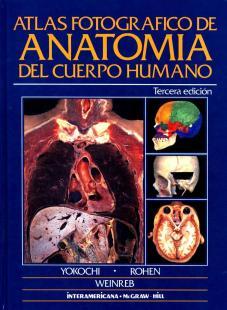 ANATOMIA HUMANO
